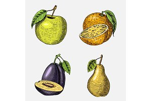 set of hand drawn, engraved fresh fruits, vegetarian food, plants, vintage looking green apple, orange and pear, plum.