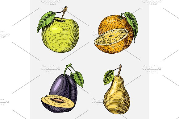 Set Of Hand Drawn Engraved Fresh Fruits Vegetarian Food Plants Vintage Looking Green Apple Orange And Pear Plum