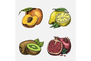 set of hand drawn, engraved fresh fruits, vegetarian food, plants, vintage looking kiwi, peach yellow lemon and pomegranate.