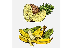 set of hand drawn, engraved fresh fruits, vegetarian food, plants, vintage looking bananas and pineapple.