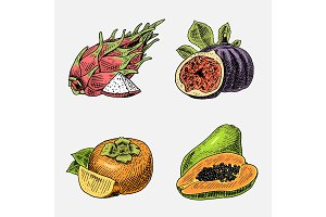 set of hand drawn, engraved fresh fruits, vegetarian food, plants, vintage looking common fig, persimmons and pitaya, papaya.