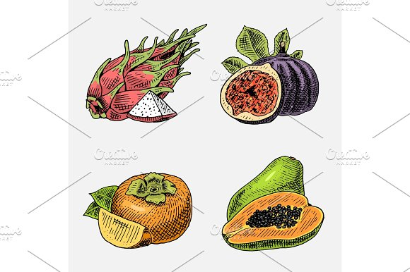 Set Of Hand Drawn Engraved Fresh Fruits Vegetarian Food Plants Vintage Looking Common Fig Persimmons And Pitaya Papaya