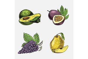 set of hand drawn, engraved fresh fruits, vegetarian food, plants, vintage looking grapes, passion fruit, quince and avocado