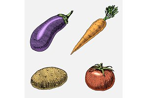 set of hand drawn, engraved vegetables, vegetarian food, plants, vintage looking carrot, potato and tomato, eggplant.