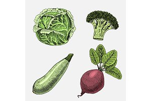 set of hand drawn, engraved vegetables, vegetarian food, plants, vintage looking zucchini, broccoli and beetroot, cabbage.