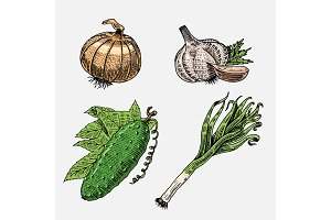 set of hand drawn, engraved vegetables, vegetarian food, plants, vintage looking cucumber, onion and garlic, leeks