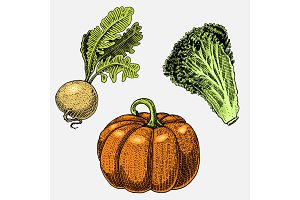 set of hand drawn, engraved vegetables, vegetarian food, plants, vintage looking pumpkin for halloween, lettuce and turnip