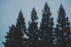 Dark Moody Trees