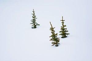 Three tree in snow