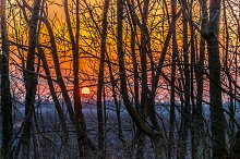 Sunset / forest