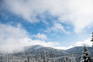 Snow covered trees and mountain forest