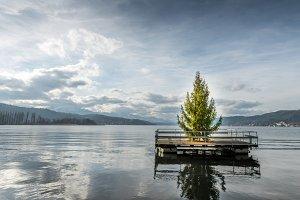 Christmas Tree / Lake