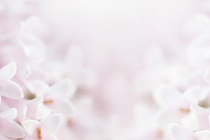 Flower Blurred Background Petal Pink
