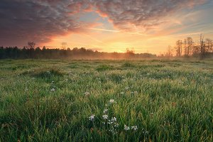 Summer meadow in the morning