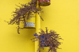 Nicely Yellow Wall & Blossom Flowers