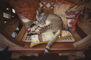 Tabby cat resting on a wooden chair