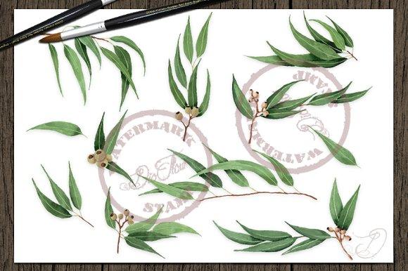 Willow Eucalyptus Watercolor Clipart Illustrations Creative Market