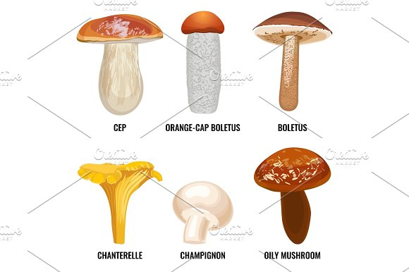 Set Of Funguses Or Mushrooms Vector Illustration On White