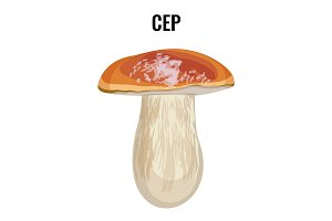 Cep fungus Boletus edulis penny bun, cep, porcino or porcini