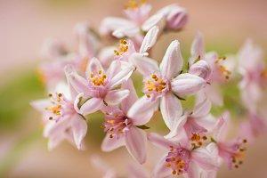 Gentle blooming sprig