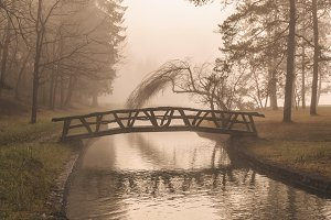 Bridge over a mystic river in Forest