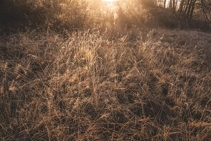 Sunrise over dried grass field