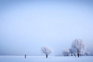 Frozen trees - winter landscape