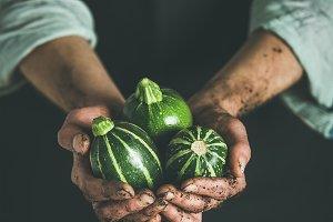 Seasonal green round zucchinis