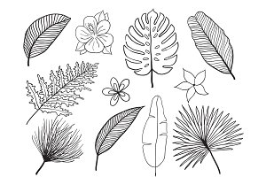 Hand drawn tropical leaves silhouette vector set. Set Leaf. Exotics. Vintage vector botanical illustration.