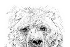 Portrait of bear drawn by hand