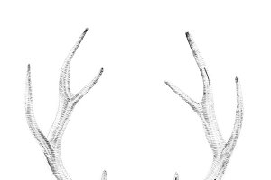 Portrait of deer drawn by hand