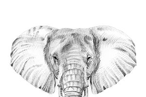 Portrait of elephant drawn by hand
