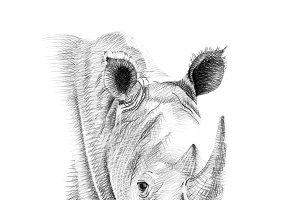 Portrait of rhino drawn by hand