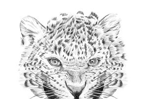 Portrait of leopard drawn by hand