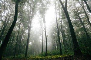 Dark forest in fog