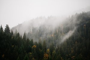 Mist over mountain forest
