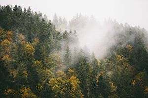 Forest in fog high in the mountains