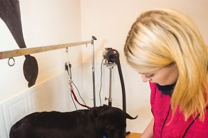 Woman using dryer on dog