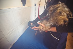 Woman using dryer on dog after wash