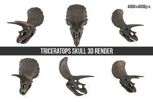 Triceratops Skull 3d Render