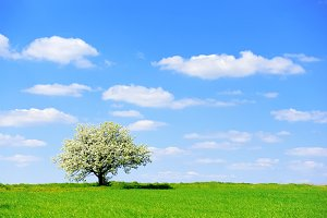 Landscape with nobody tree