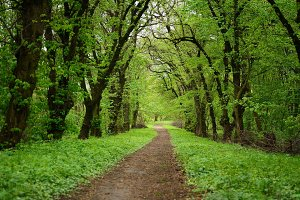 Path in the forest with green trees