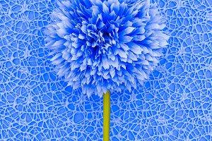 Plant. Minimal art design details