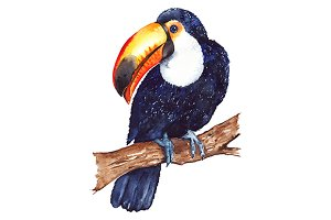 Watercolor toucan animal bird