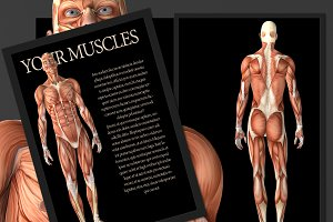 Your Body_ Muscle