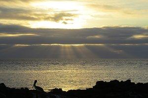 Galapagos shorescape - sunset