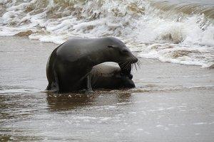 Sea lion on shoreline