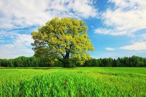 Green tree on meadow