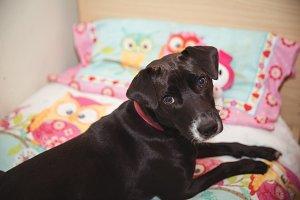 Black beagle sitting on dog bed at dog care center