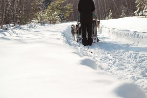 Rear view of musher riding the sledge